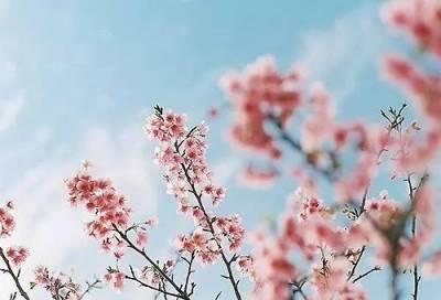春風輕輕起,真的好想你