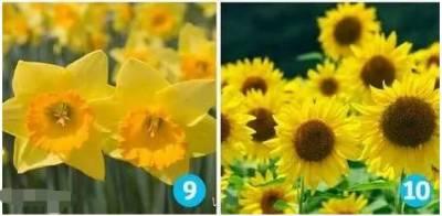10朵花選一朵,1秒看透你是哪種女人!