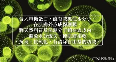 【海藻萃取物】對於肌膚的好處比你想像還多 保濕 抗老 活化