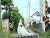 先愛自己才能懂得被愛!魏妙如《偉大的旅行》穿著婚紗,回到當年一個人旅行的東京,謝謝當年那個勇敢的自己