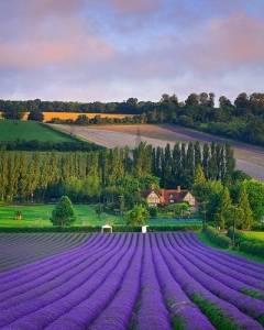 想跟你一起去那遙遠的地方…融入那紫色薫衣花海中…