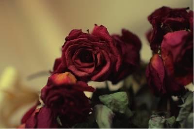 『丈夫用枯萎的玫瑰把她的心拉回家』..感動分享!值得省思!
