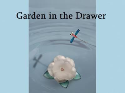 抽屜裡的小花園