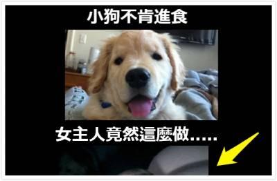 【瘋傳新奇】小狗不肯進食,女主人竟然這麼做.....