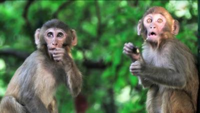 男猴跟男人差在哪裡? 看完這篇的女人都被驚醒了!