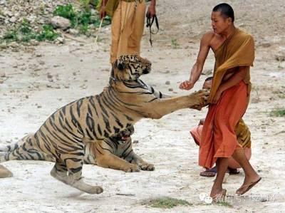 全球可怕的動物襲擊人類事件!鱷魚竟然咬斷獸醫的手臂...