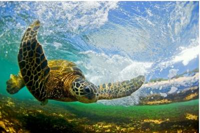 他是世界上最棒的海浪攝影師。而這一切只為當初的一個承諾