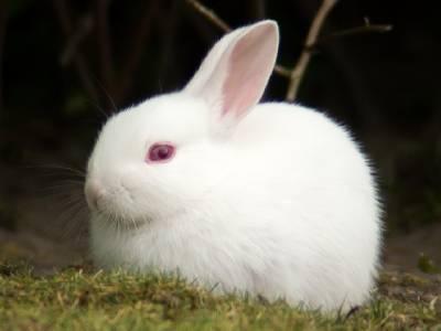 彷彿像剛哭過那般楚楚可憐 日本女孩都愛的「兔顏妝」小教室