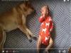 熟睡中的柴犬被小寶寶「揍了一拳後驚醒」,但牠溫柔的回擊卻融化了每個父母的心!