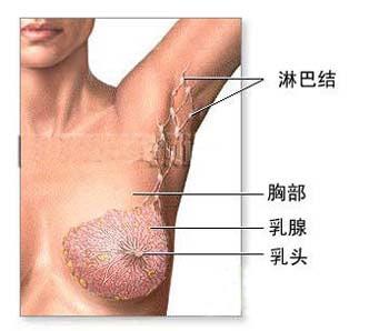 不要亂拔或剃腋毛?姐妹們,讓我們遠離乳癌 !