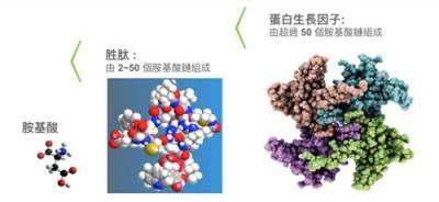 胜肽複合 再進化